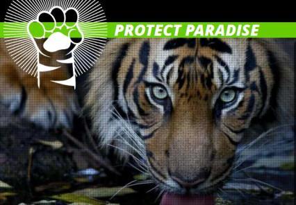 http://www.greenpeace.org/seasia/id/aksi-kamu/Protect-Paradise/