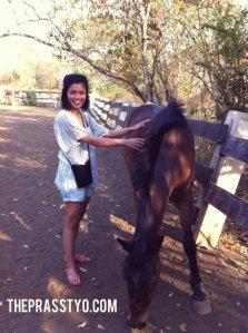 Tiks horsey 01