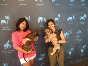 V&L Dogs