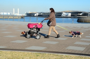 Dogs everywhere here! dan jalan - jalan pakai stroller. Itu stroller isi anjing ya buibu bukan isi bayikkk... :D
